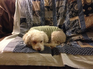 Daisy likes sashiko. And quilts.