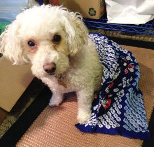 Daisy modeling the warm fabric fresh from the dryer.