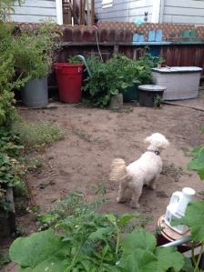 garden_july14.1